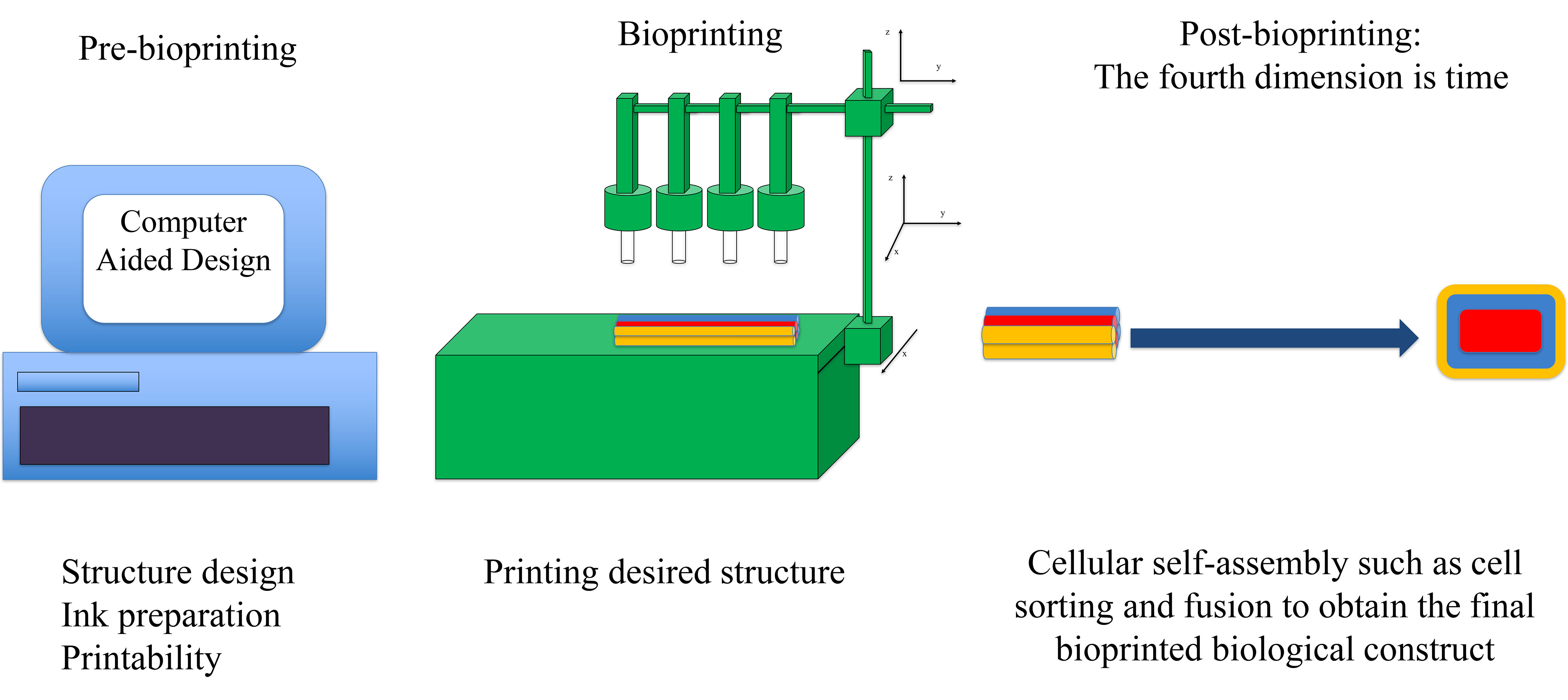 Bioprinting comprises three main stages: 1. Pre-bioprinting, which includes structure design, bioink preparation, and printability assessment. The laws of physics can help scientists prepare bioinks with tunable parameters for the best fabrication outcome; 2. The bioprinting process, which involves the delivery of optimized, as-prepared bioinks in the desired shape using a computer-controlled system; 3. Post-bioprinting, the most critical stage, which incorporates the fourth dimension of bioprinting, time. This stage involves several cellular self-assembly processes governed by physical laws. The physics of cellular self-assembly has been investigated by researchers to achieve functional and viable bioprinted tissues/organs. CREDIT: Ashkan Shafiee