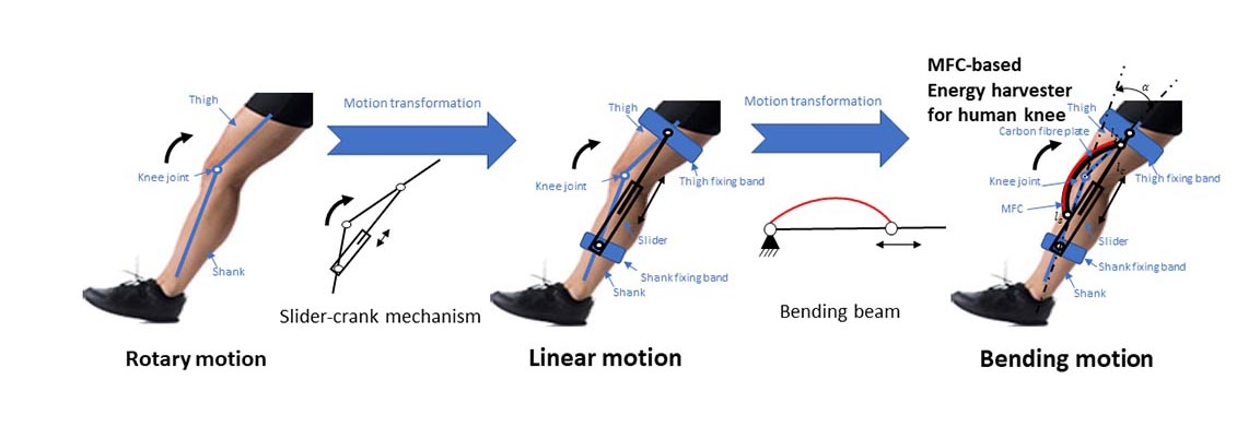 Diagram of the slider-crank mechanism that generates energy during the knee's motion. CREDIT: Gao et al.