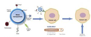 Schematic drawing showing action of magnetic nanoparticles on cancer cells