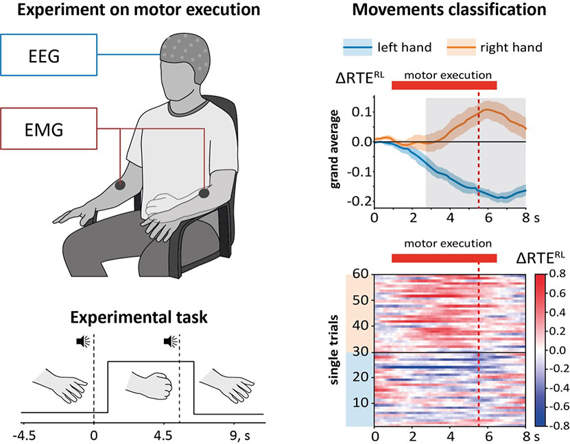 The left side of the illustration shows the group's experimental study and task. Participants squeeze their hand into a fist after an audio command (zero seconds) and hold it squeezed until given a second audio command (approximately five seconds). Electroencephalography (EEG) and electromyography (EMG) signals are recorded to relate the brain and muscle activity. The right side of the illustration shows the results of the executed movements classification. http://nctech-lab.ru/en Credit: Nikita Frolov/Innopolis University