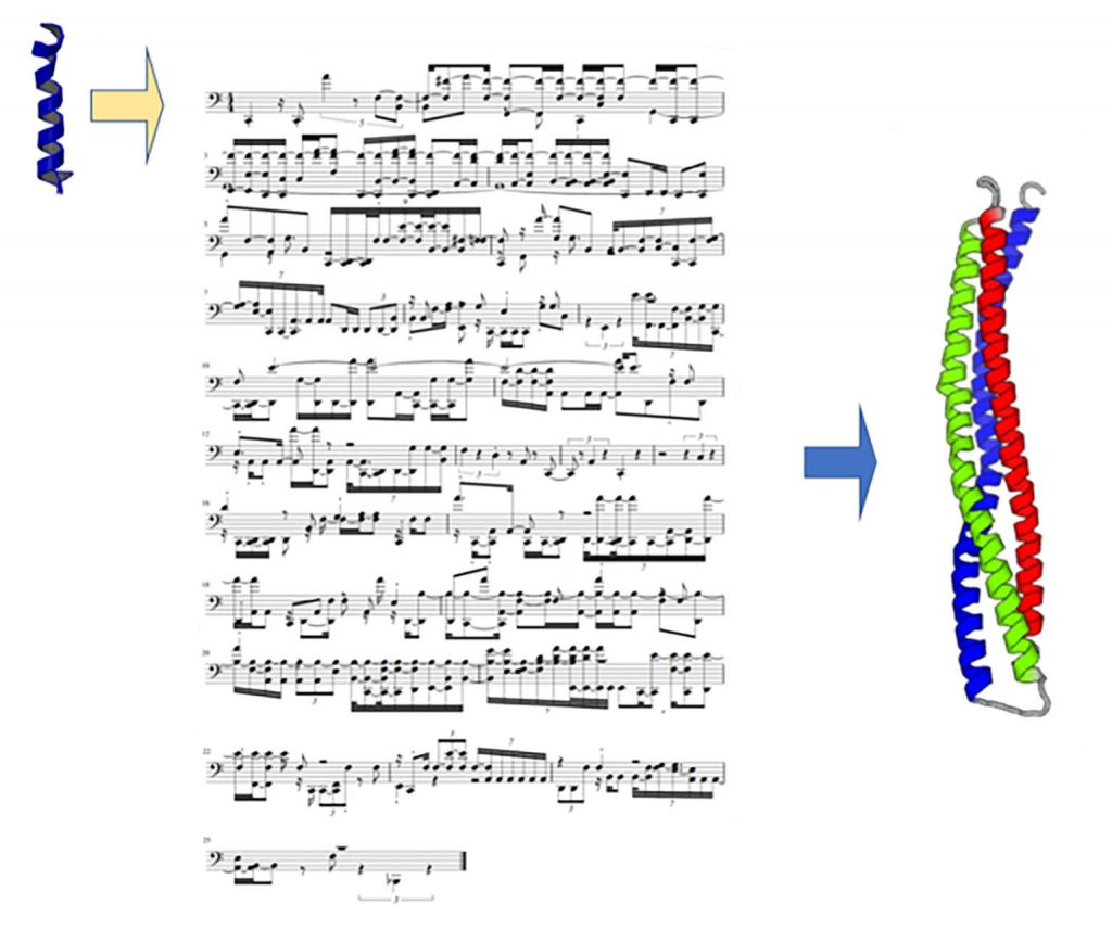 Using musical scores to code the structure and folding of proteins composed of amino acids, each of which vibrates with a unique sound. CREDIT: Markus J. Buehler