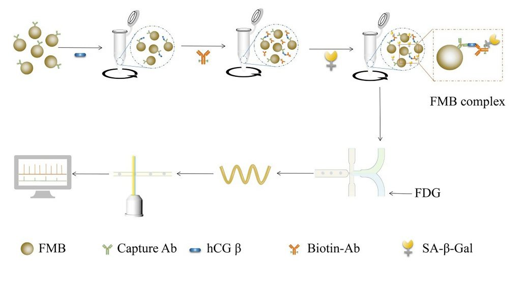 Diagram of hCGβ detection by microfluidic droplet and multicolor fluorescence detection CREDIT: Zeng Yong