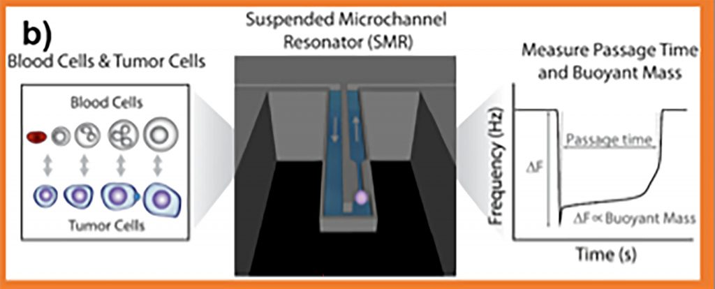 A cell's transit through a suspended microchannel resonator can be used to determine its passage time and buoyant mass. CREDIT: Shaw Bagnall J, Byun S, Begum S, Miyamoto DT, Hecht VC, Maheswaran S, Stott SL, Toner M, Hynes RO, Manalis SR, Scientific Reports, Vol.5, doi: 10.1038/srep18542; licensed under a Creative Commons Attribution (CC BY 4.0) license.