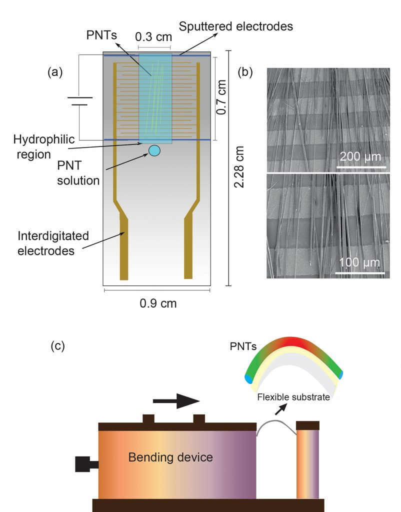 Optical (a-c) and lateral piezoresponse force microscopy (LPFM) phase images (d-f) of the peptide nanotubes on interlocking electrode substrates: (a, d) without alignment, (b, e) aligned using both electric field and UV/ozone, and (c, f) aligned PNTs with graphene oxide (GO) using both electric field and UV/ozone. CREDIT: Sawsan Almohammed