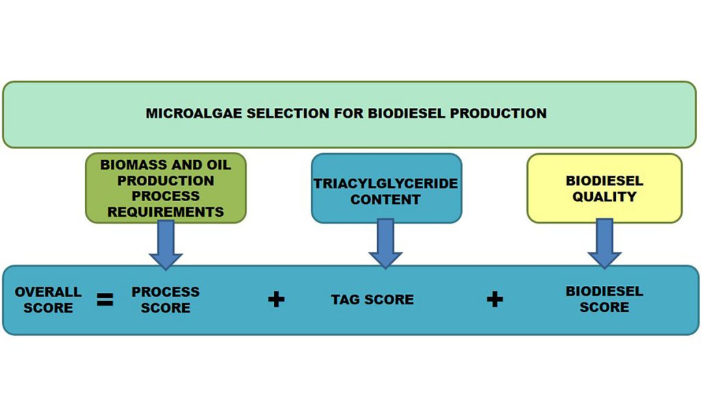 Schematic diagram for the process to obtain overall score for evaluating microalgal species for biodiesel production CREDIT: Lucas Martín