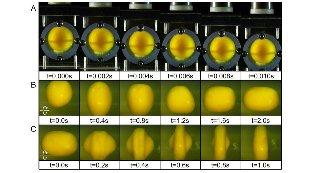 A) Reactions of an egg yolk under translational impact. The shell was hit with a hammer to achieve translational acceleration. B) Reactions of egg yolk under rotational acceleration impact. The container was set to rotate instantaneously. C) Reactions of egg yolk under rotational deceleration impact. The rotation speed of the container was reduced sharply to create a deceleration impact on the egg yolk. CREDIT: Ji Lang and Qianhong Wu