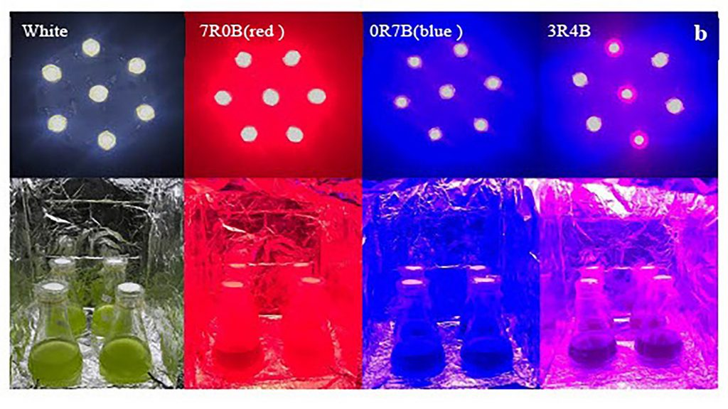 LED illuminators installed with different combinations of red and blue light, with white as the control light. CREDIT: Xiaojian Zhou/Yangzhou University