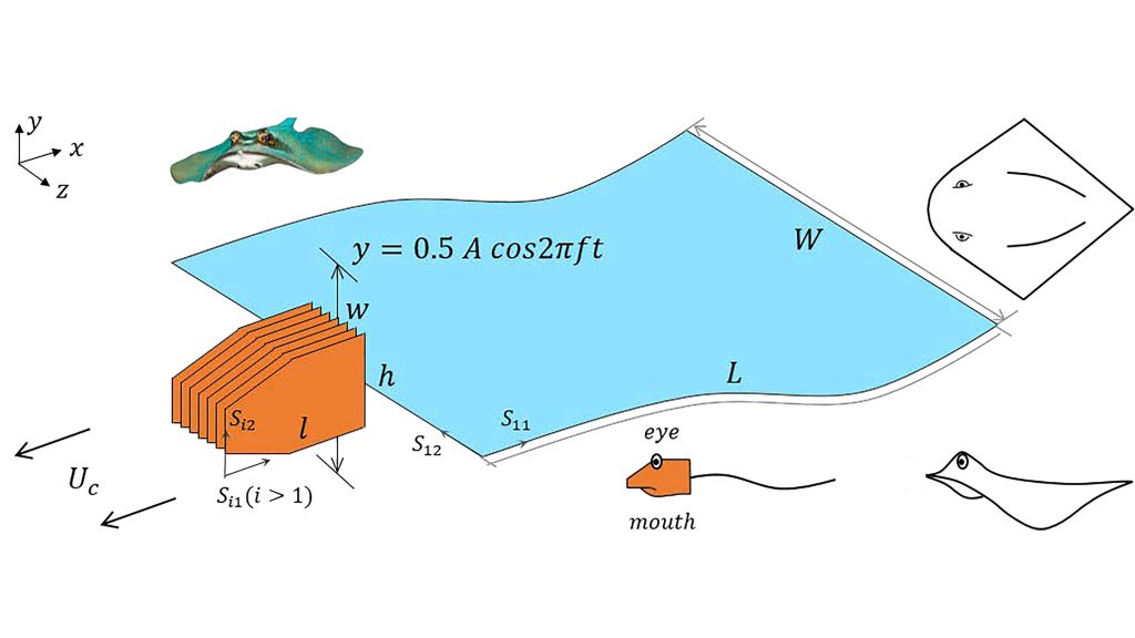 Schematic of the self-propelled flexible plate with eyes and mouth. CREDIT: Qi-an Mao